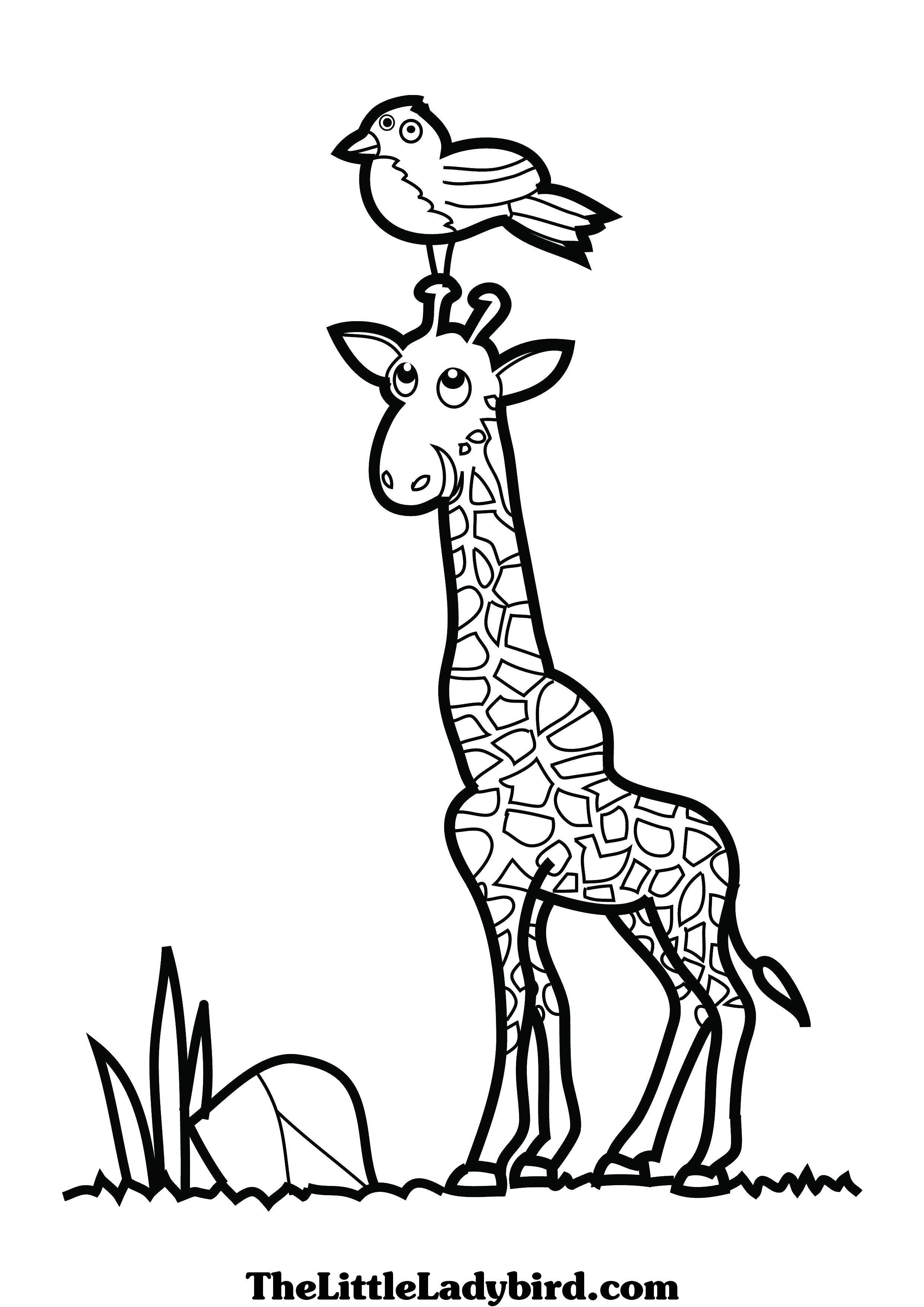 Раскраска Птичка села на жирафика Скачать Животные, жираф.  Распечатать ,Животные,
