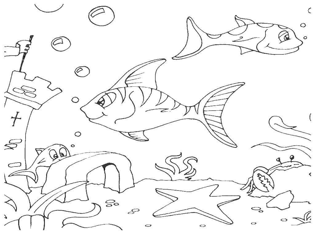 Раскраска Подводный мир Скачать море, вода, рыбы, морские жители.  Распечатать ,морские обитатели,