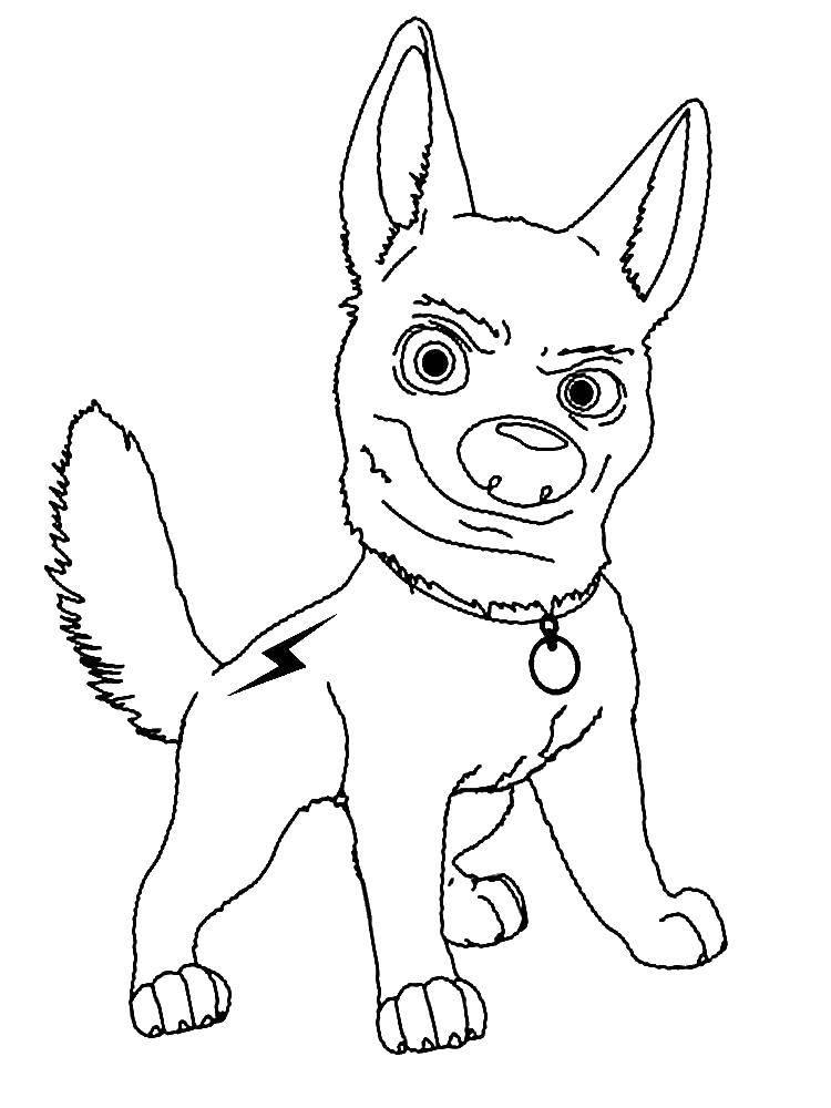 Раскраска Собака вольт Скачать Вольт, собака.  Распечатать ,Вольт мультик,