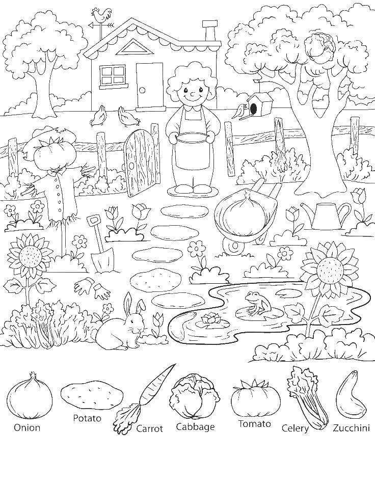 Раскраска огород Скачать ,огород, овощи, животные,.  Распечатать