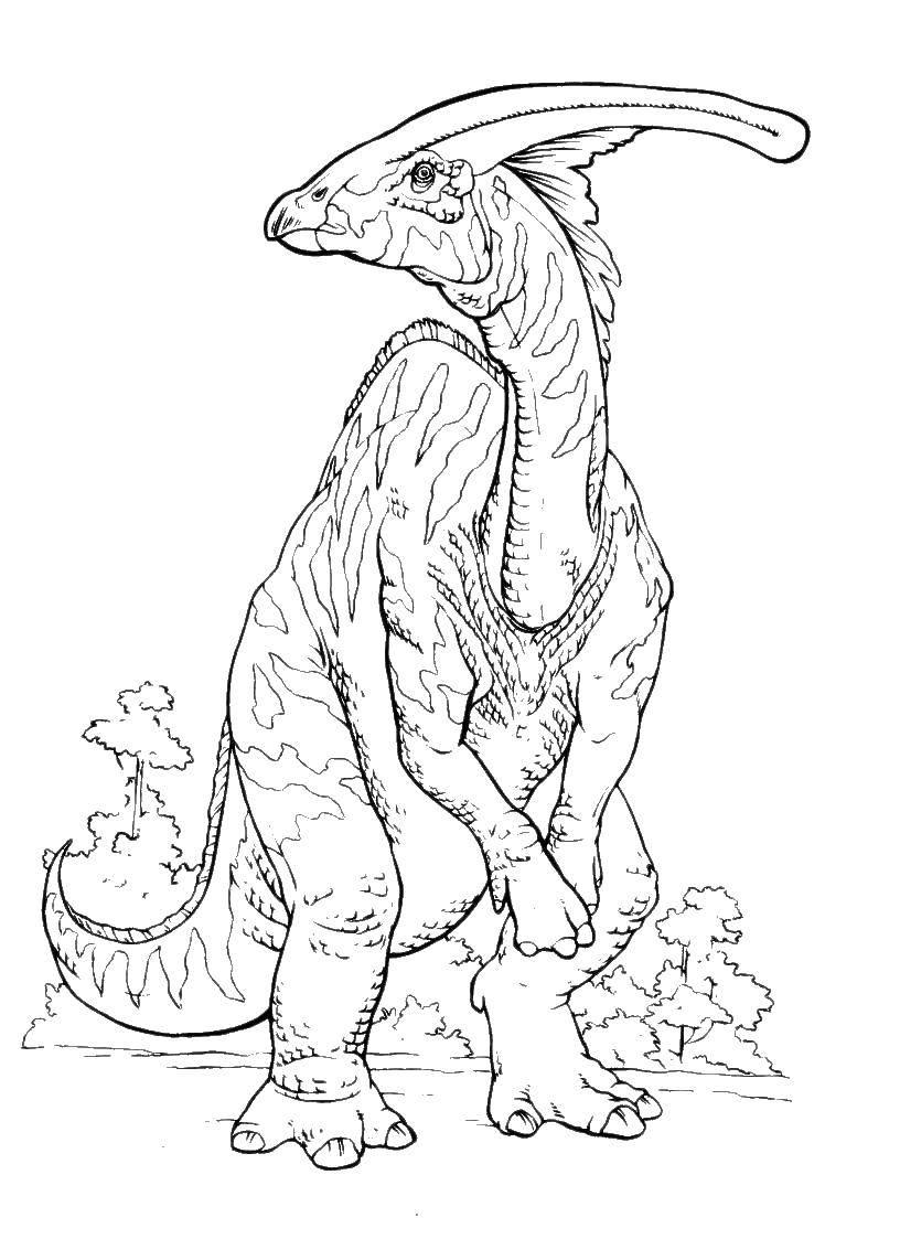 Раскраска Динозавр с гребнем на голове Скачать Динозавр.  Распечатать ,динозавр,