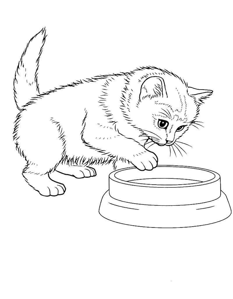 Раскраска котята и щенки Скачать ,Персонаж из мультфильма, Маша и Медведь,.  Распечатать