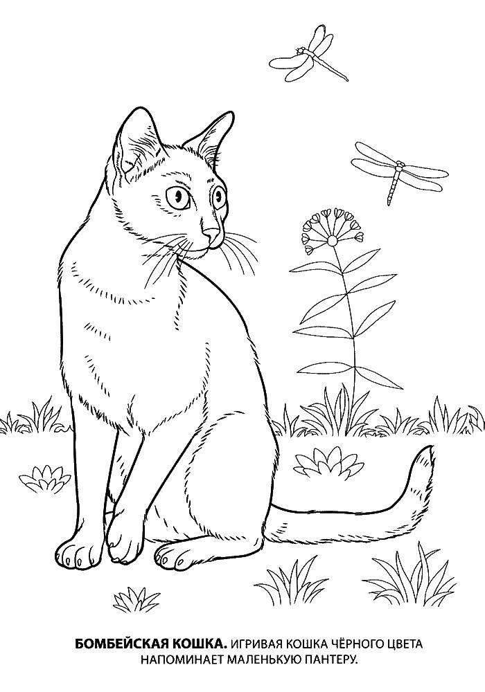 Раскраска Кошка Скачать кирби, мультики.  Распечатать ,Кирби,