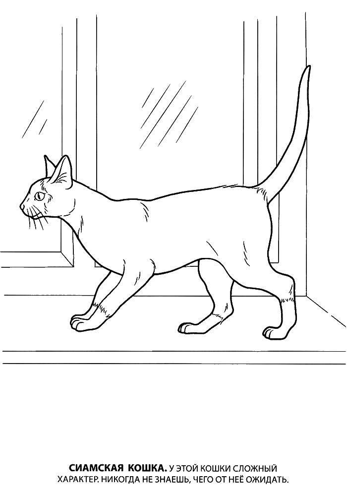 Раскраска котята и щенки Скачать Зоопарк, животные.  Распечатать ,Животные,