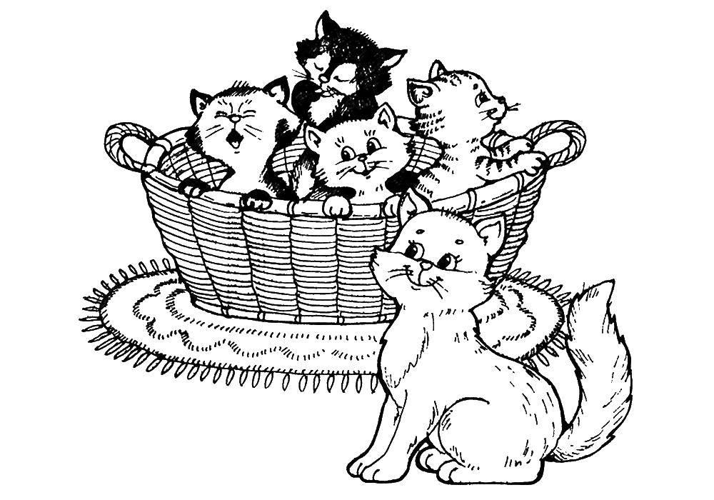 Раскраска Коты и котята Скачать ,Комиксы,.  Распечатать