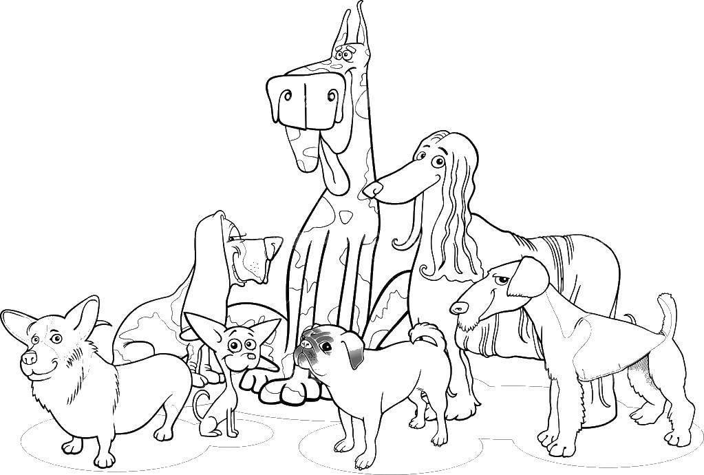Раскраска Семейство собак различных колли бульдог такса питбуль овчарка Скачать собаки.  Распечатать ,собаки всех пород,