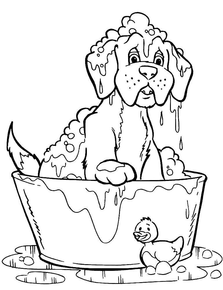 Раскраска Собаку моют в лоханке с водой Скачать собака, умывается.  Распечатать ,собаки,