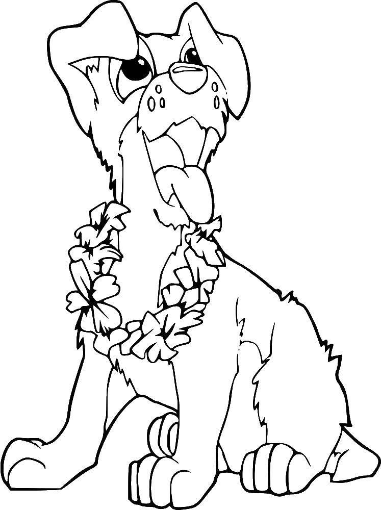 Раскраска собаки щенки Скачать Спорт, гимнастика.  Распечатать ,гимнастика,