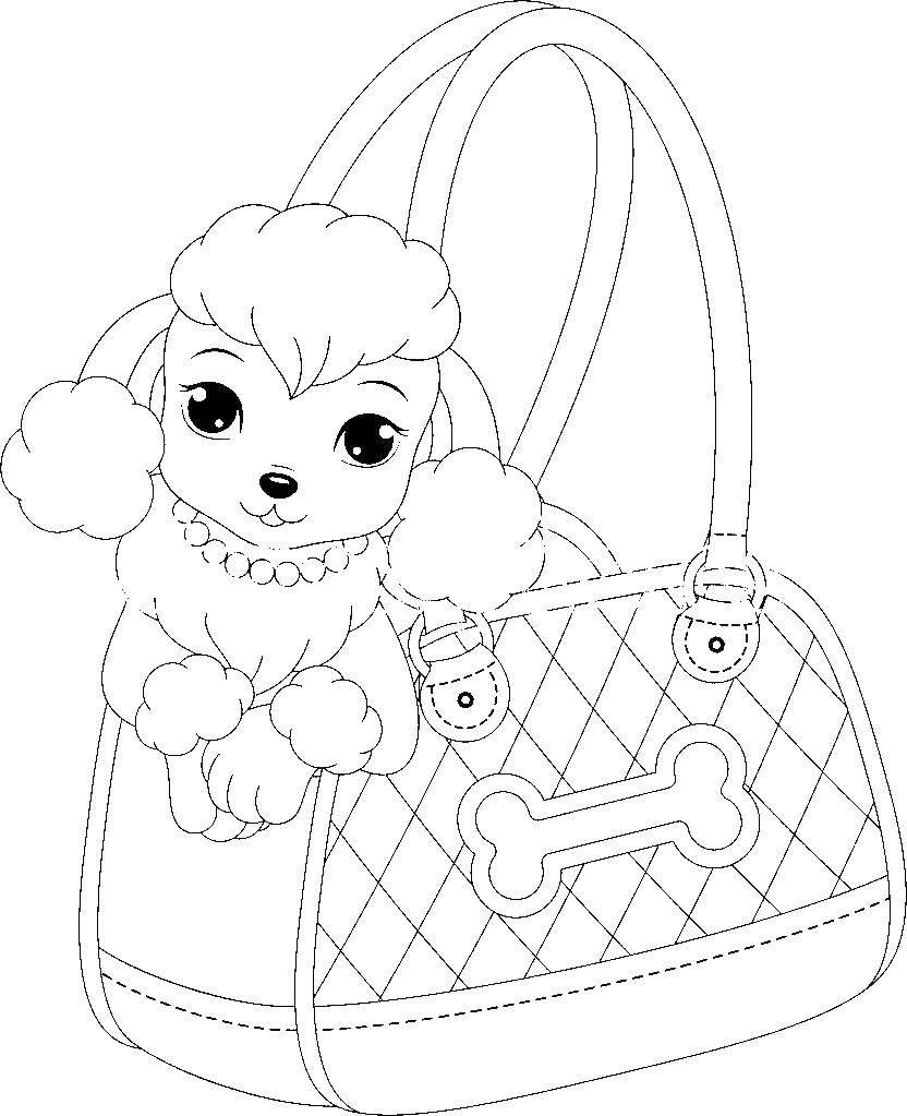Раскраска Пудель в сумке Скачать собака, пудель.  Распечатать ,собаки пудель,