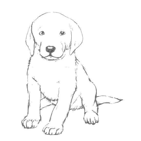 Раскраска собаки хаски Скачать ,Парк Юрского периода,.  Распечатать