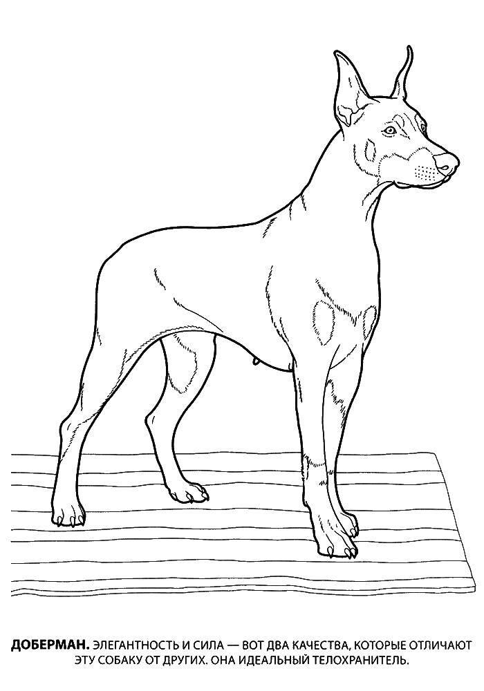 Раскраска собаки Скачать щенки, бабочки, корзина, косточки.  Распечатать ,собаки,