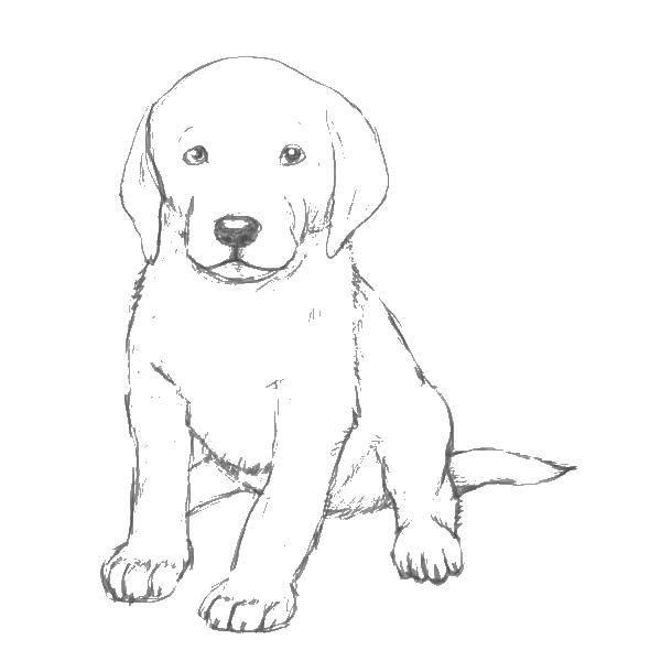 Раскраска рисуем собаку Скачать свинка Пеппа, стол, мама, папа, брат.  Распечатать ,Свинка Пеппа,