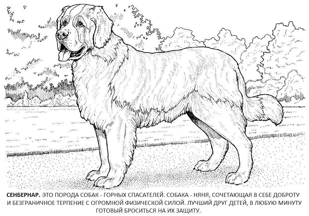 Раскраска собаки Скачать Хэли, робокар.  Распечатать ,поли робокар,