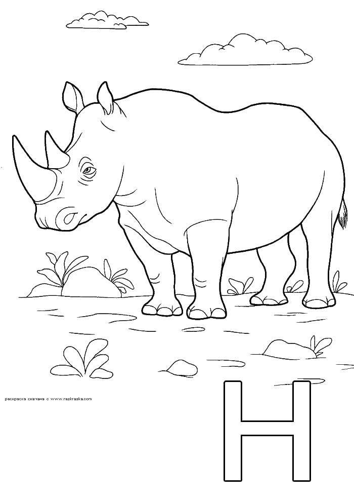 Раскраска Носорог Скачать Носорог, животные.  Распечатать ,Животные,