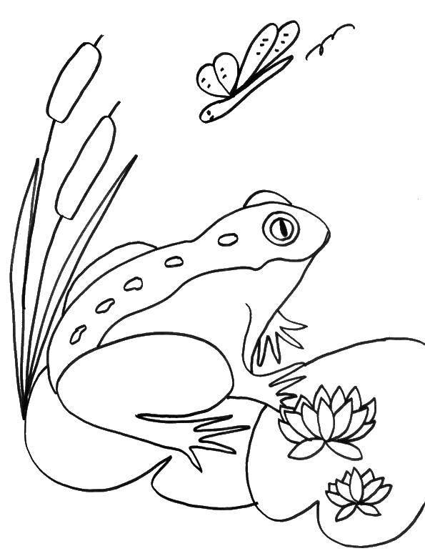 Раскраска Жаба Скачать ,Рептилия, лягушка,.  Распечатать