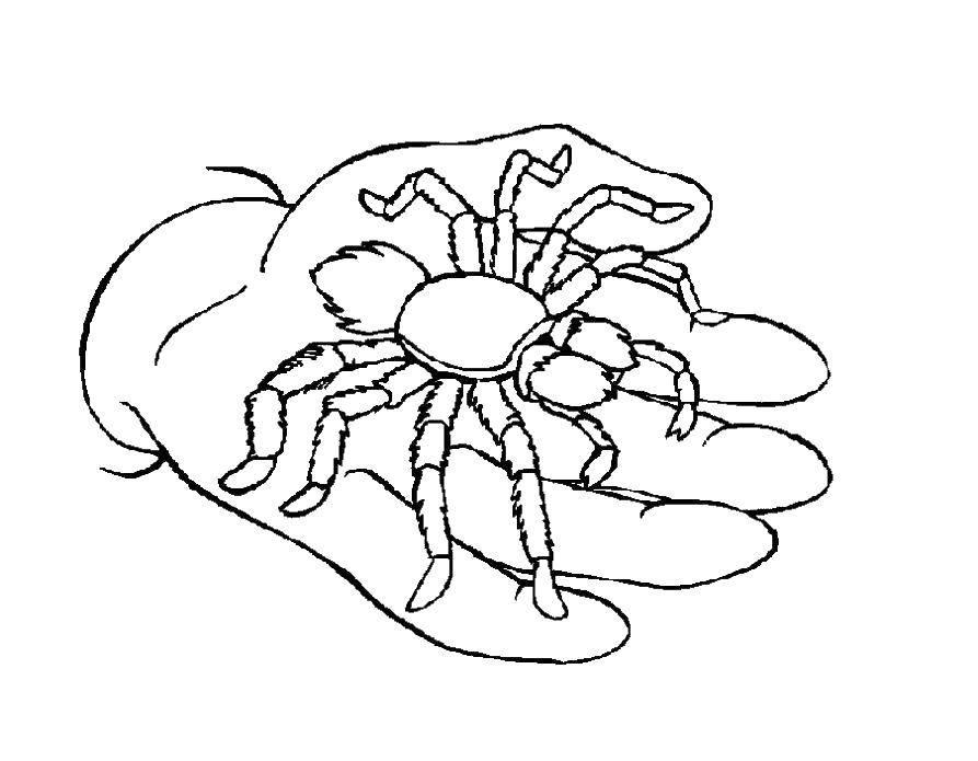 Раскраска раскраски пауки Скачать ,девушка, масленица, люди,.  Распечатать
