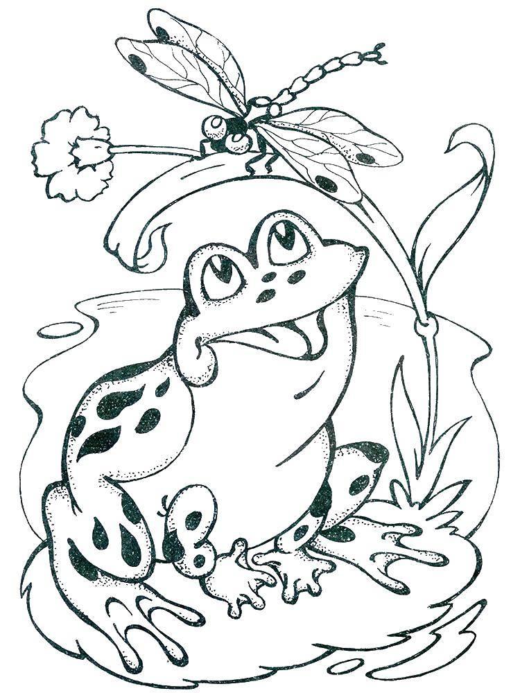 Раскраска лягушка Скачать Овощи.  Распечатать ,овощи,
