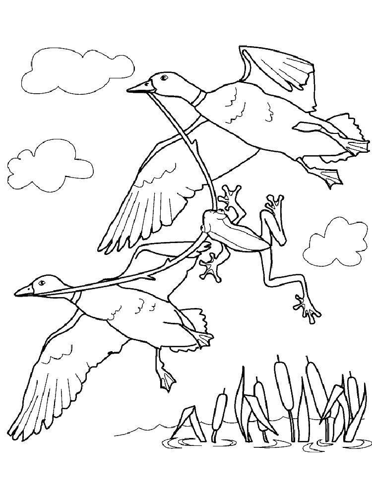 Раскраска Птицы уносят лягушку Скачать Рептилия, лягушка.  Распечатать ,лягушка,