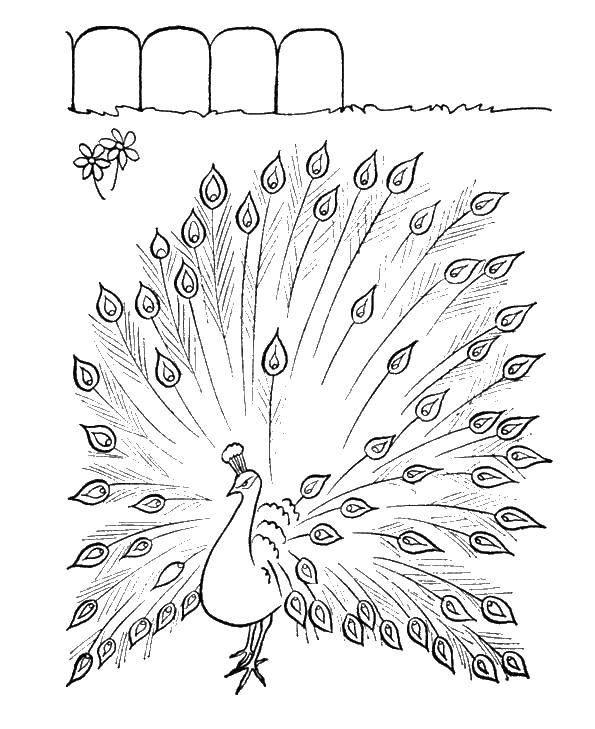 Раскраска птицы Скачать ,Деньги,.  Распечатать