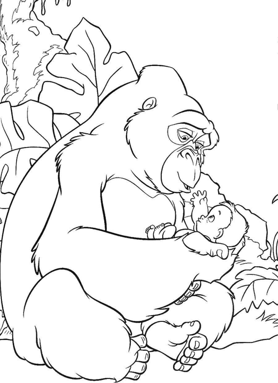 Раскраска Горилла нашла тразана Скачать ,Тарзан, горилла,.  Распечатать