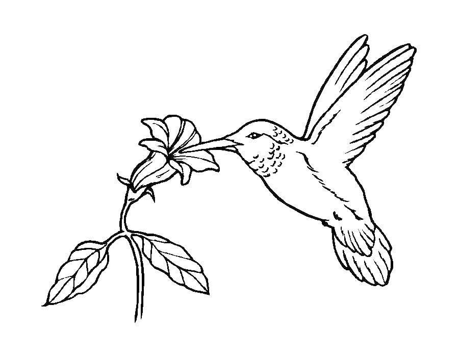 Раскраска птицы Скачать ромашка, смайлик.  Распечатать ,Узоры с цветами,
