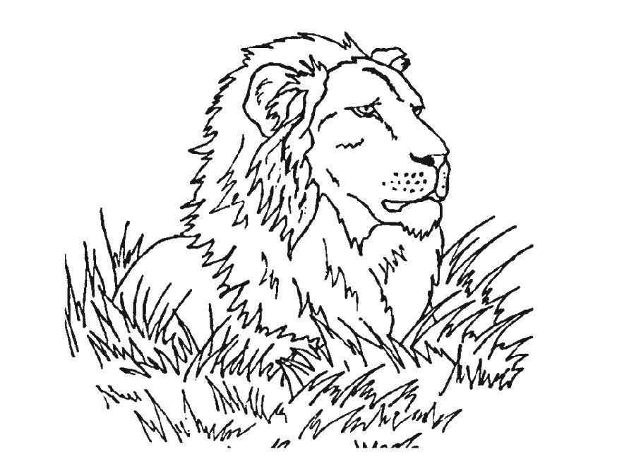 Раскраска лев Скачать ,смайлик, язык,.  Распечатать