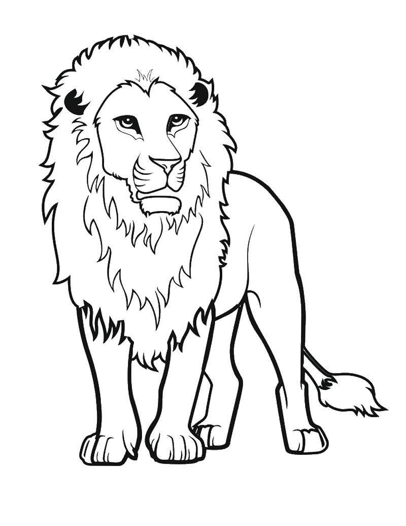 Раскраска лев Скачать Полиция, машина, Поли, робокар.  Распечатать ,поли робокар,