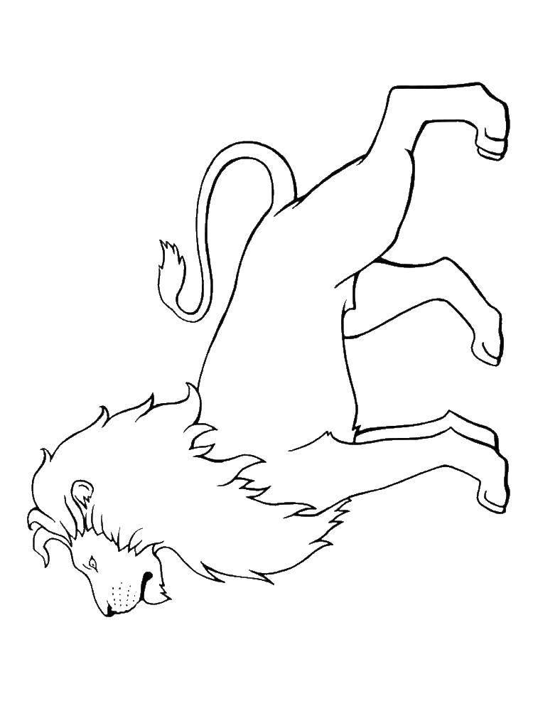 Раскраска лев Скачать остров.  Распечатать ,остров сокровищ,