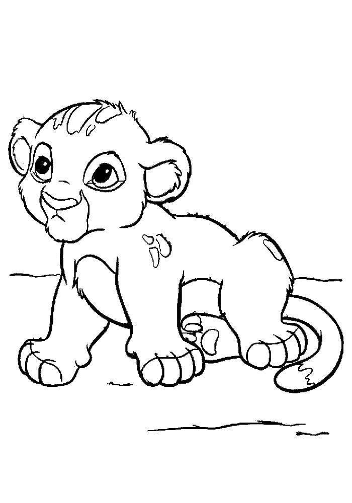 Раскраска Львенок симба Скачать ,Симба, тимон, пумба,.  Распечатать