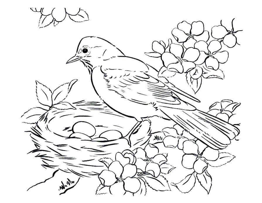 Раскраска птицы Скачать спорт, гимнастика, гимнастка.  Распечатать ,гимнастика,