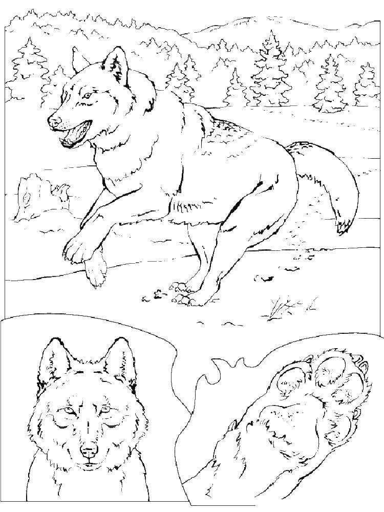 Раскраска волк Скачать Рождество, ёлочная игрушка.  Распечатать ,Рождество,