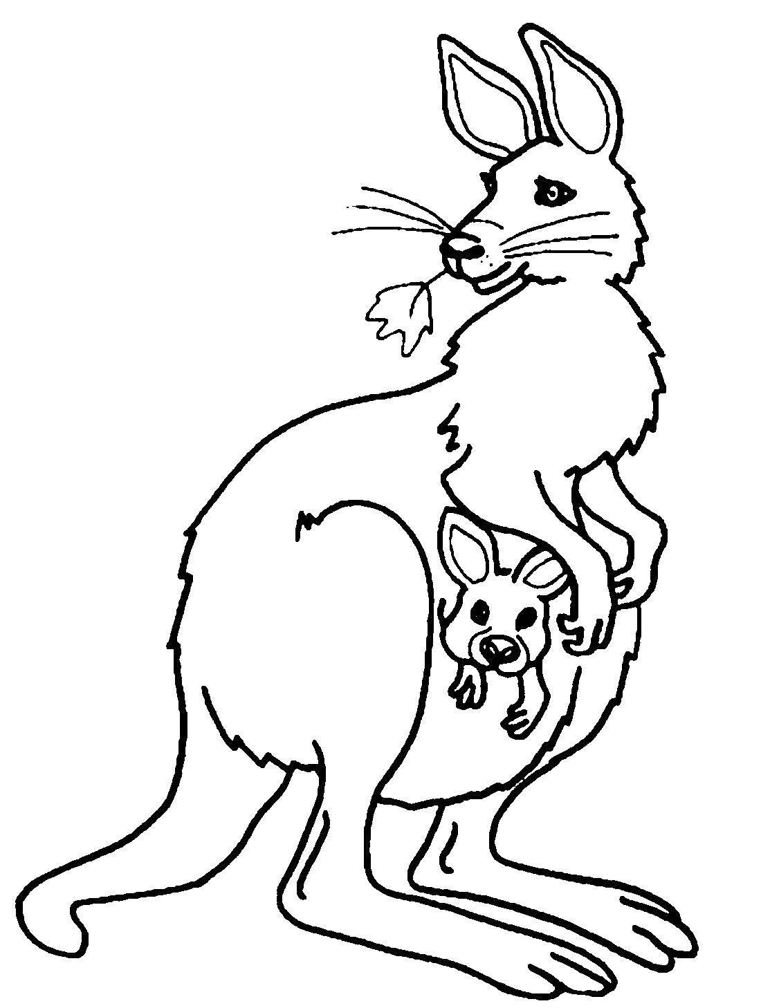 Раскраска Кегуру Скачать кенгуру, животные, карман.  Распечатать ,Животные,