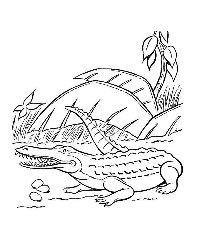 Раскраска Крокодильчик. Скачать животные, крокодил, аллигатор.  Распечатать ,Животные,