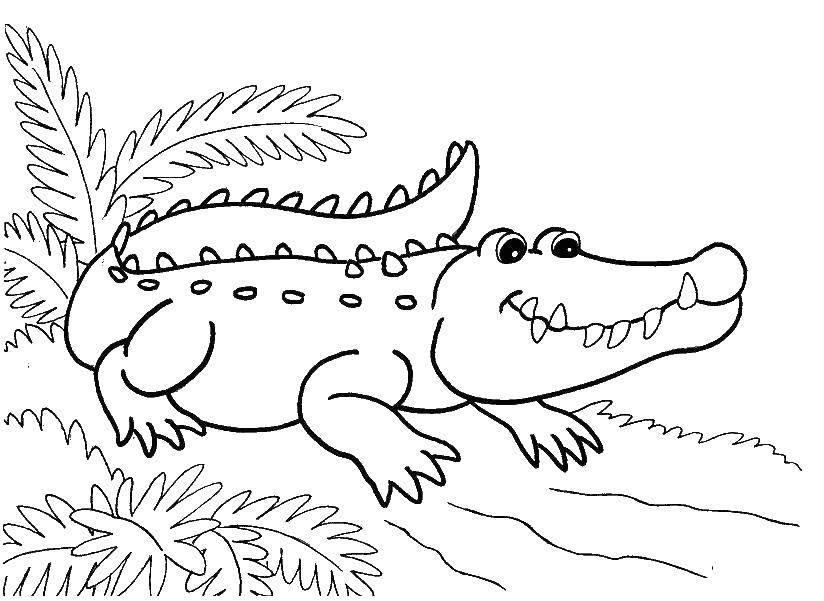 Раскраска Маленький крокодильчик. Скачать животные, крокодильчик, крокодил.  Распечатать ,Животные,