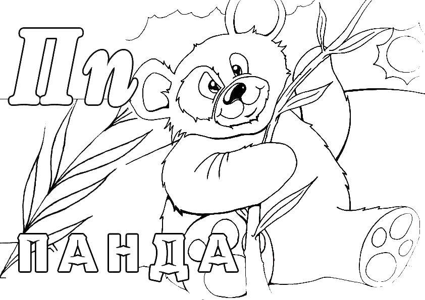Раскраска Панда ест тросник Скачать панда, тросник.  Распечатать ,Животные,