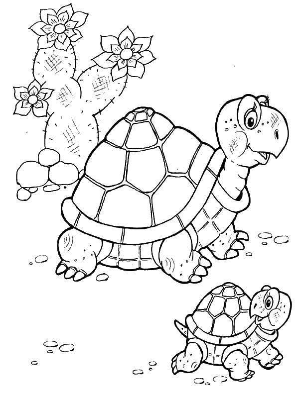 Раскраска Черепаха с черепашонком Скачать ,Черепаха, черепашонок,.  Распечатать