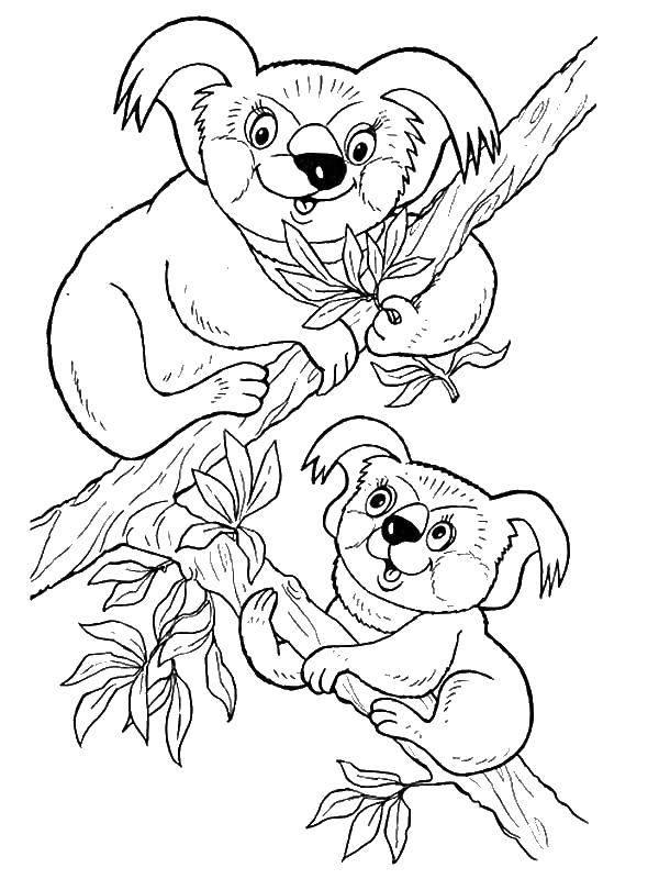 Раскраска Животные Скачать Белоснежка, Жасмин, Золушка, Ариэль.  Распечатать ,Принцессы,