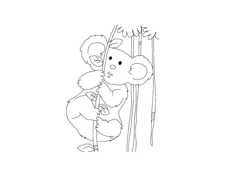 Раскраска коала Скачать принцессы, мультфильмы, сказки, Белоснежка.  Распечатать ,белоснежка,