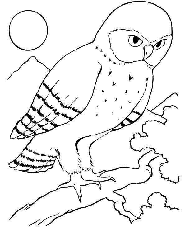 розмальовки птахи страница 5