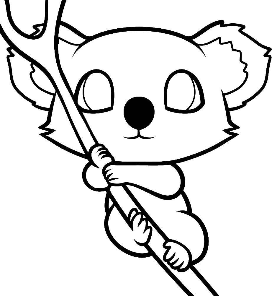 Раскраска коала Скачать ,Коала, дерево,.  Распечатать
