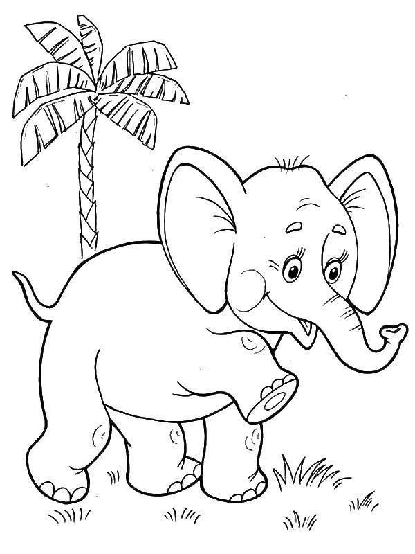 Раскраски слон, poisk.
