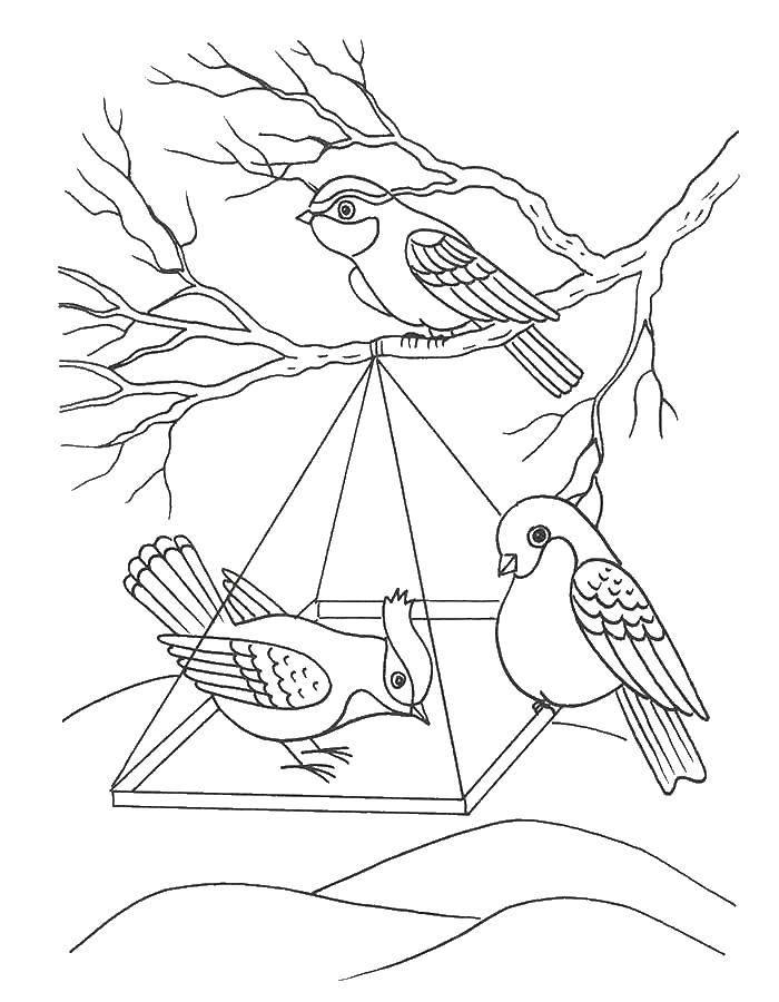 Раскраска Птицы едят из кормушки Скачать кормушка, птицы.  Распечатать ,птицы,