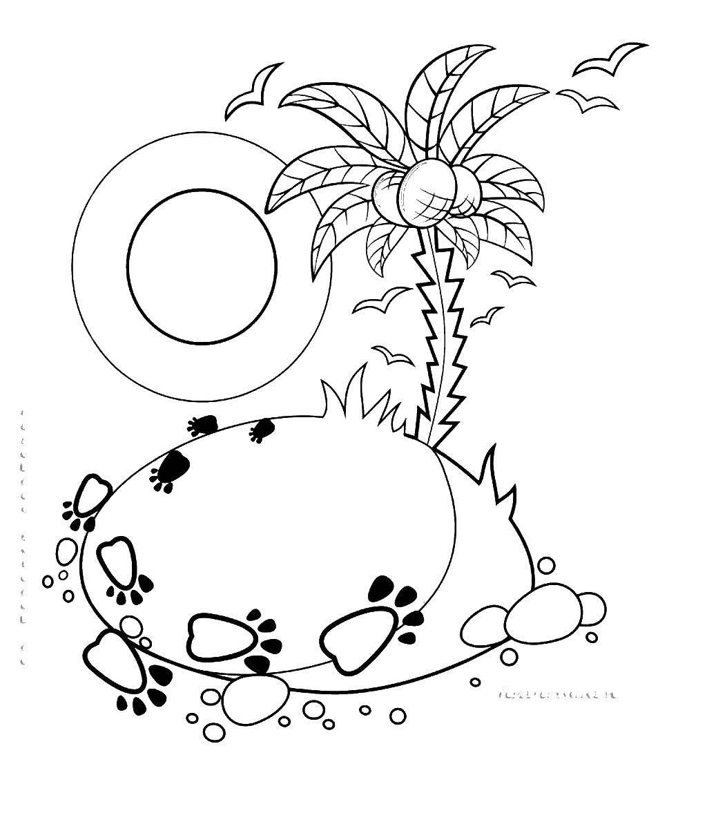 Раскраска львенок и большая черепаха Скачать ,следы, остров,,.  Распечатать