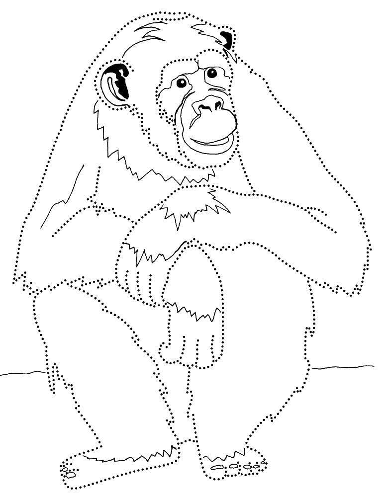 Раскраска обезьяна Скачать ,2, цифра, цветы,.  Распечатать
