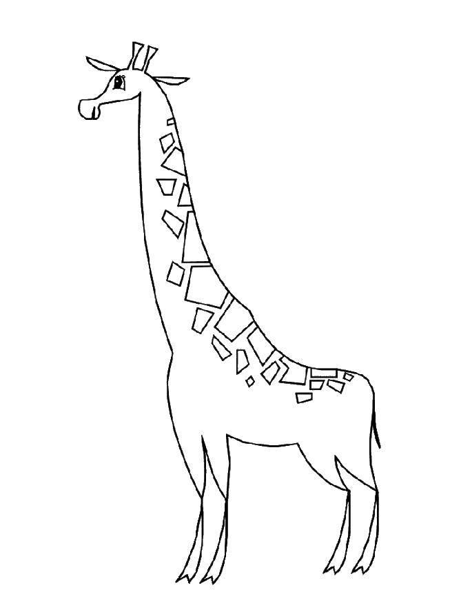 Раскраска жираф Скачать Спорт, гимнастика.  Распечатать ,гимнастика,