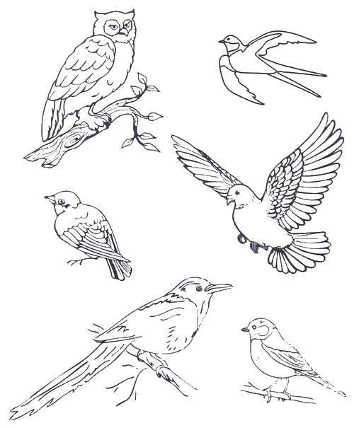 Раскраска Дикие птицы Скачать Птицы.  Распечатать ,птицы,