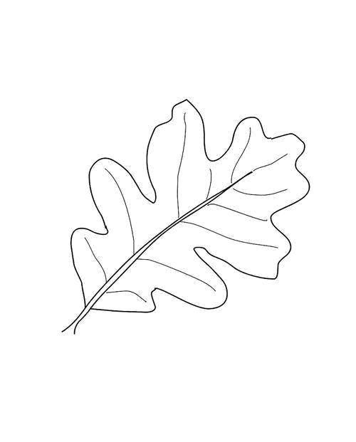 Раскраска дубовый лист Скачать ,повар, кондитер,.  Распечатать