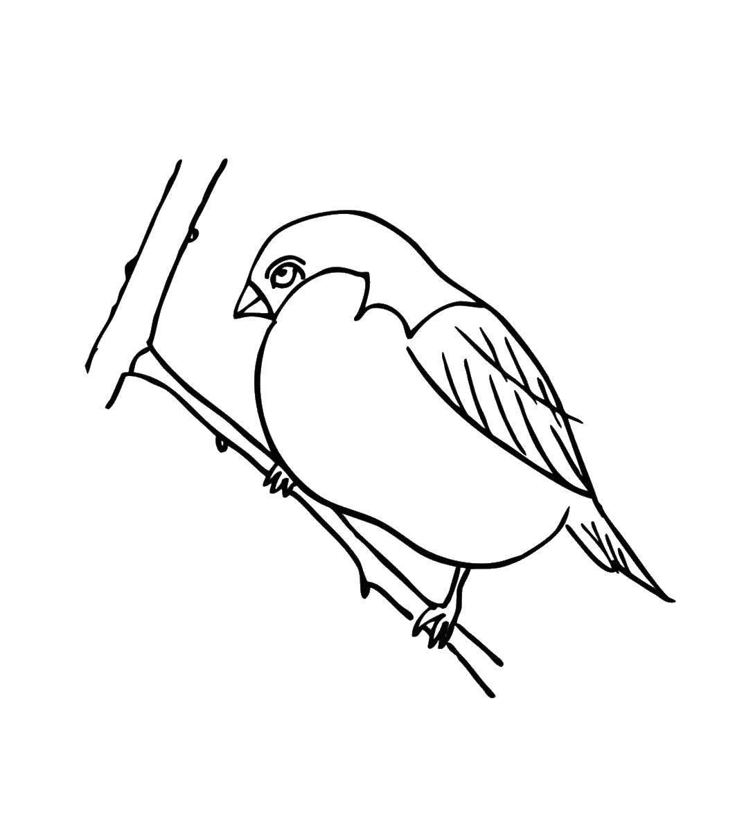 Раскраска птицы Скачать ,атомы, молекулы,.  Распечатать