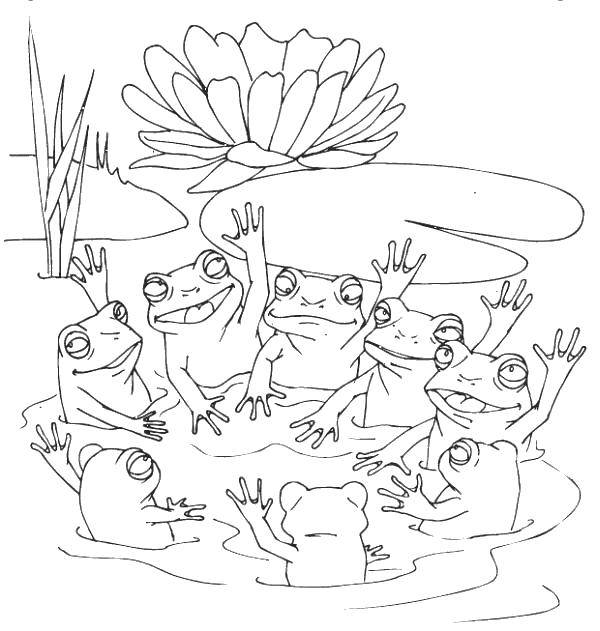 Раскраска Лягушата. Скачать Рептилия, лягушка.  Распечатать ,лягушки,
