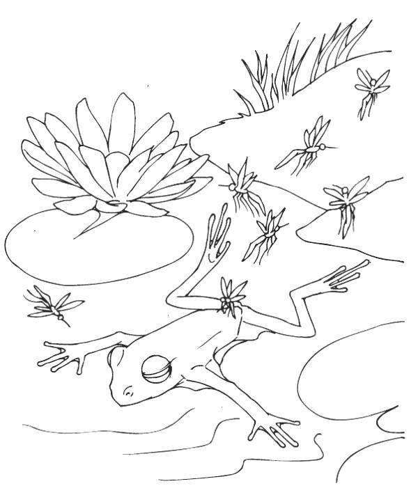 Раскраска Стрекозы и лягушка. Скачать Рептилия, лягушка.  Распечатать ,лягушки,